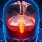 Votre cerveau bientôt contrôlé grâce aux ultrasons?